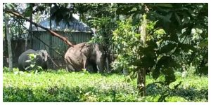 Elephant herds in the village in search of food, in anger, vandalized several houses