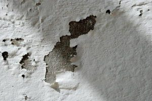 HOW TO PREVENT YOUR HOME WALL FROM DAMP